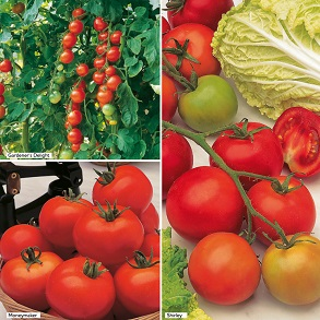 Gardener's Favourite Collection - Grafted Tomatoes