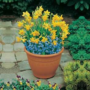 Plant-O-Tray Bulbs - 4 for £30