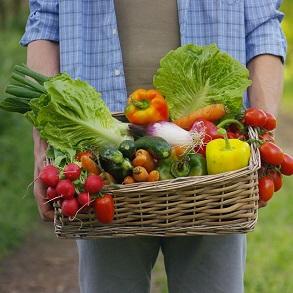 Organic Veg Seeds
