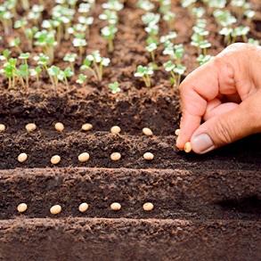 Compost & Plant Food
