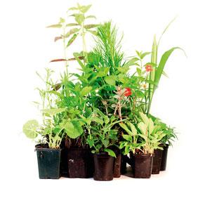 Premier Perennial Plants