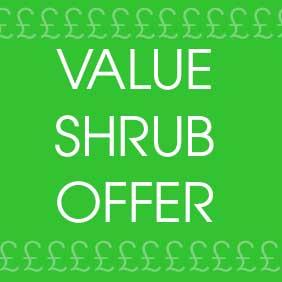 Value Shrub Offer