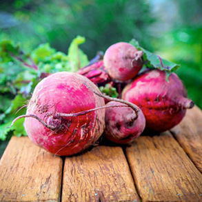 Beetroot Plants