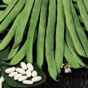 Runner Bean Seeds