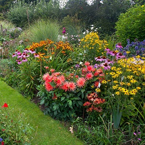 Cottage Garden Perennials-Our Selection