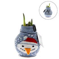 Amaryllis with Jumper Snowman