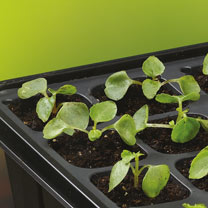 Easy to use just add compost and water. Ideal for seeds, cuttings or small plug plants.