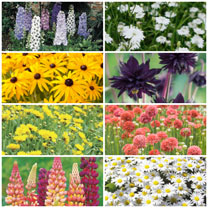 Image of 100 Perennial Plants Lucky Dip