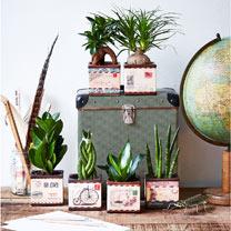 4 Airmail Pots + 4 FREE Plants