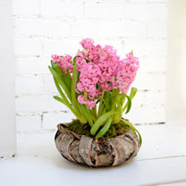 Hyacinth Wreath - Pink