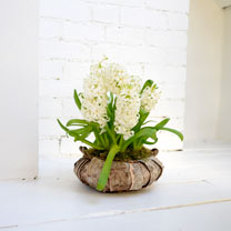 Hyacinth Wreath - White