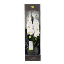 Orchid Cascade Formidablo