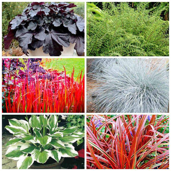 Fabulous Foliage Collection