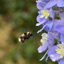 Chatsworth Show Pollinator Plants