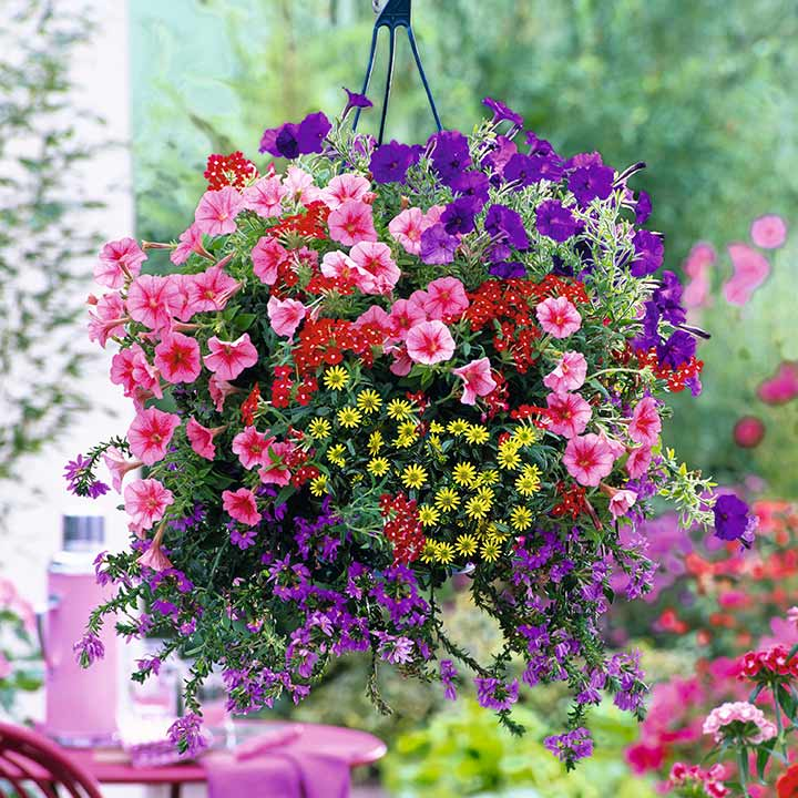 Basket and Container Mix Plants - Our Selection