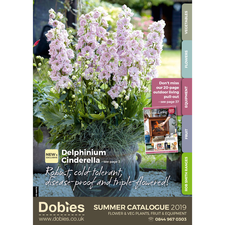 Dobies Summer Catalogue