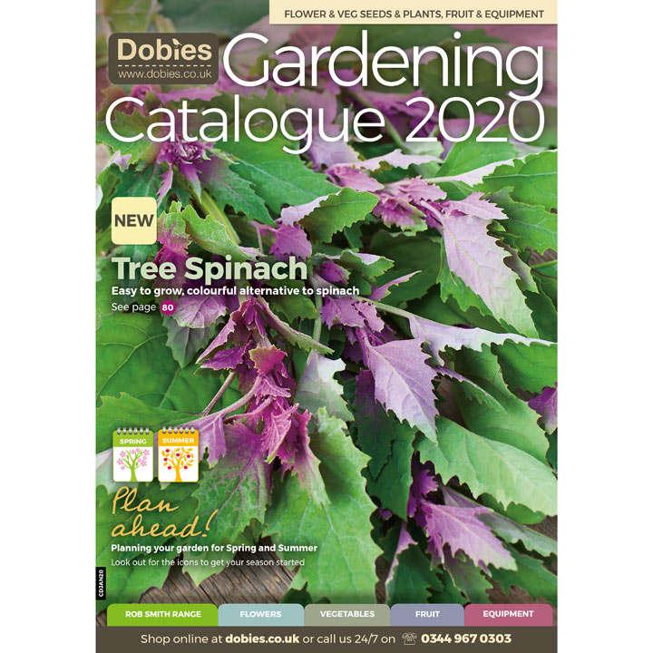 Dobies January Catalogue