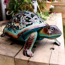 Ornate Solar Tortoise
