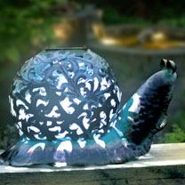 Ornate Solar Snail