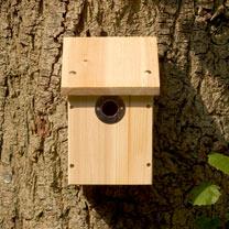 Camera Ready Nestbox