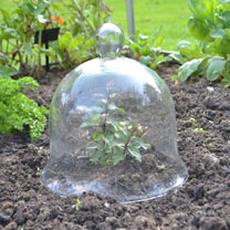 Bell Glass Cloche