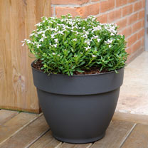 Ninfea Water Reservoir Planter 30cm - Anthracite