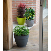 Garden Planters Supports Planters Equipment Garden Dobies