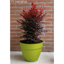 Ninfea Water Reservoir Planter 30cm - Lime
