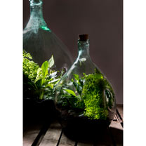 Terrarium Bottle