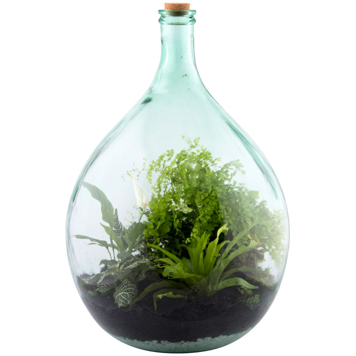 Terrarium Bottle 55L