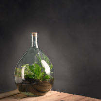 Terrarium Bottle 35L and Starter Kit