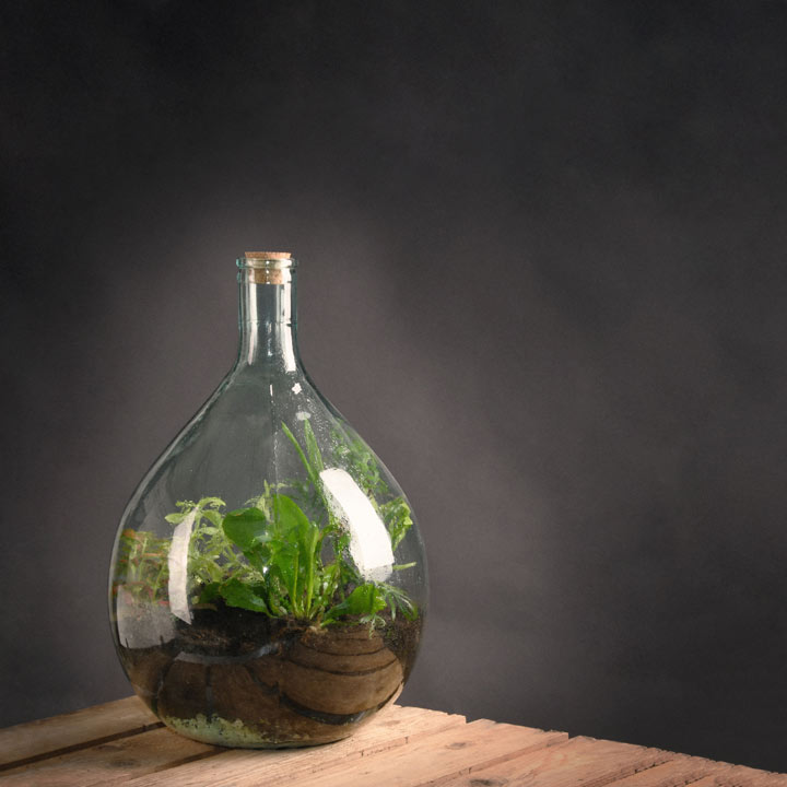 Terrarium Bottle & Starter Kit