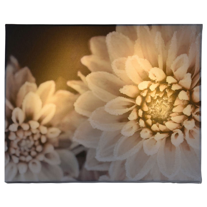 Decorative LED Canvas - Dahlia