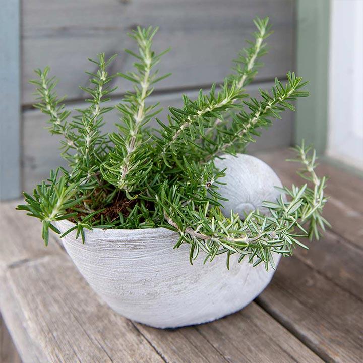 White Shell Flower Pot