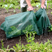 Easy Netting Tunnel (3m Standard)