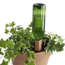 Hydro Wine-Recycle a wine bottle