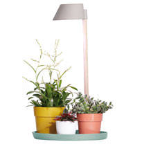 Indoor Plant Light Care