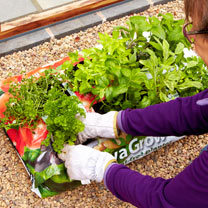 RHS SylvaGrow peat-free planter for organic growing