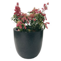 Lux Egg Planter - Medium