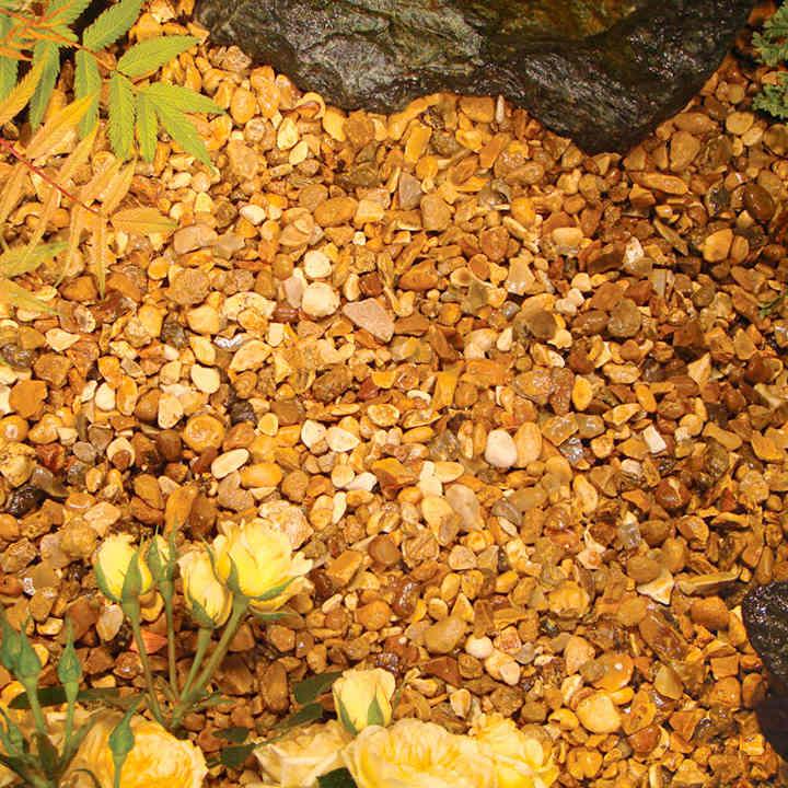 Autumn Gold - Bulk