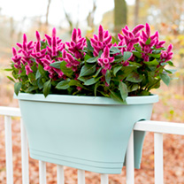 Corsica Flower Bridge Planter - Mint
