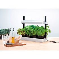 Micro Grow Light Garden - Black