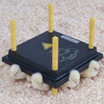 Image of Chicken Comfort Brooder 25 Plus