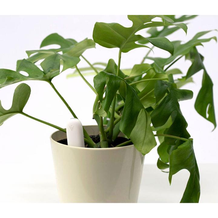 Grow Care Probe or Care Pot