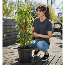 Tomato Pot & Grow Frame