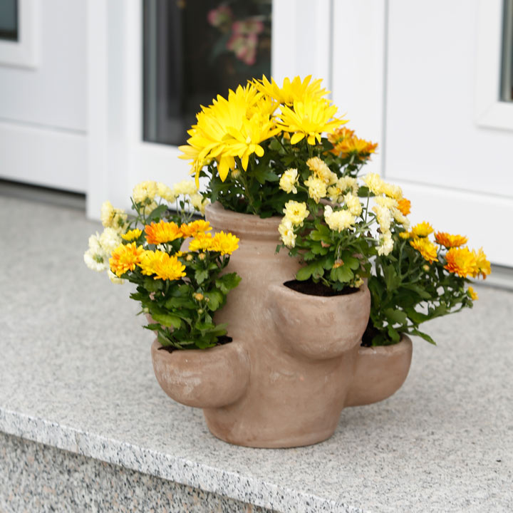 Terracotta Herb planter