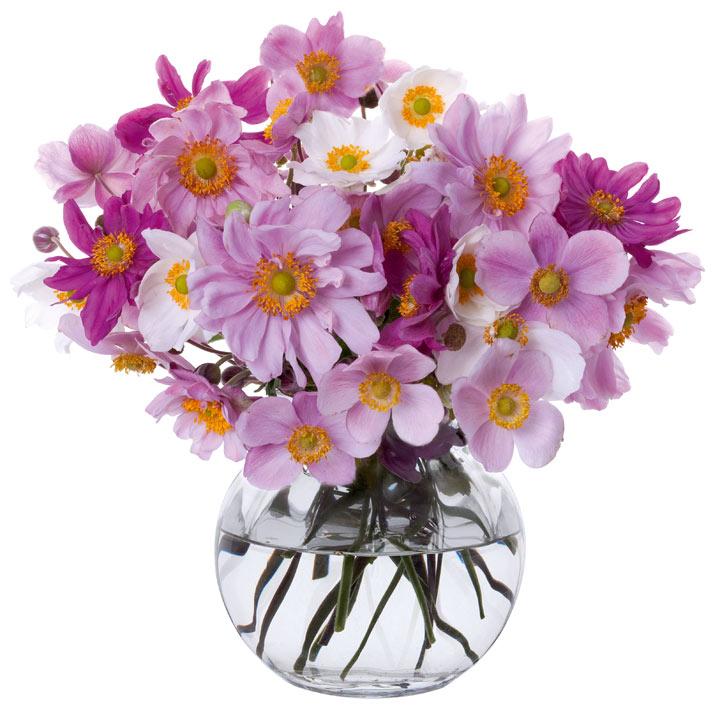 Anemone Vase