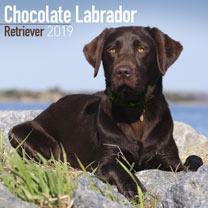 Image of Dog Breed 2018 Calendar - Chocolate Labrador Retriever