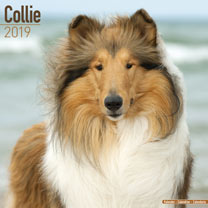 Image of Dog Breed 2018 Calendar - Collie
