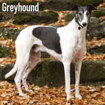 Image of Dog Breed 2018 Calendar - Greyhound
